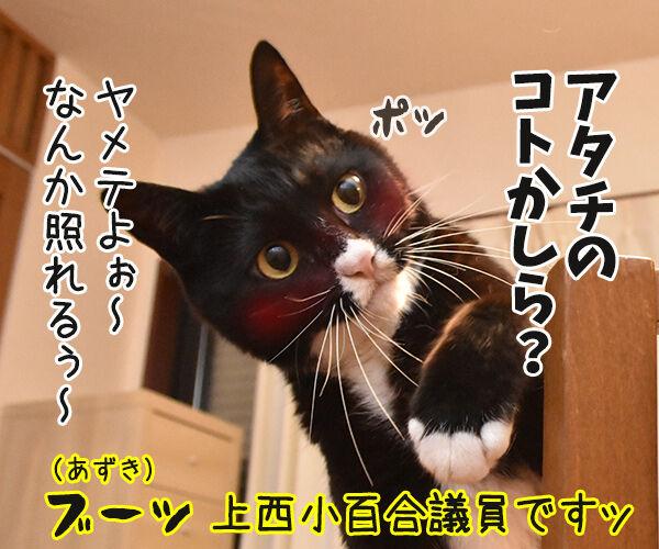 松たか子と前田敦子と沢尻エリカ 猫の写真で4コマ漫画 3コマ目ッ