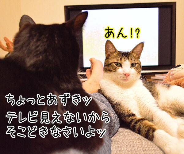 見えないのよッ 猫の写真で4コマ漫画 1コマ目ッ