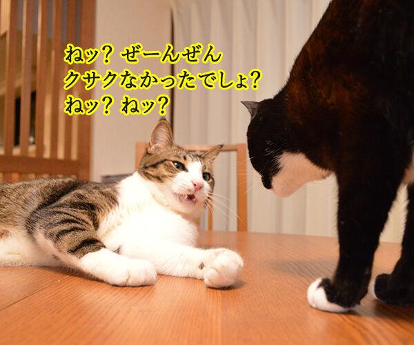 ボクのおててはクサクない 猫の写真で4コマ漫画 3コマ目ッ