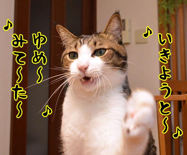 耳をすませば カントリーロード 猫の写真で4コマ漫画 2コマ目ッ