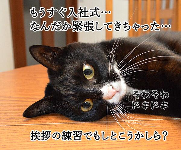 新人あいさつ 猫の写真で4コマ漫画 1コマ目ッ