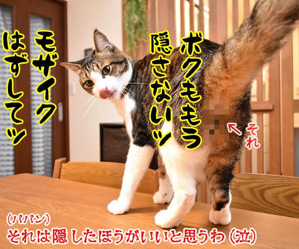 今週のコンプライアンス標語はこれなのよッ 猫の写真で4コマ漫画 4コマ目ッ