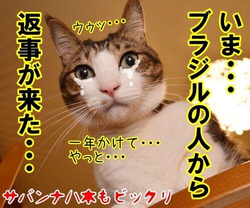 大きな声で呼びかけてッ 猫の写真で4コマ漫画 4コマ目ッ