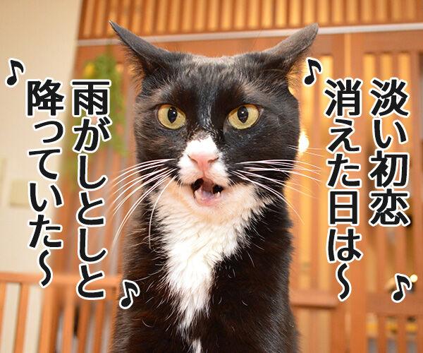 しとしと雨音は集中力をアップさせるのよッ 猫の写真で4コマ漫画 1コマ目ッ