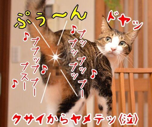 音楽っていいねッ 猫の写真で4コマ漫画 4コマ目ッ