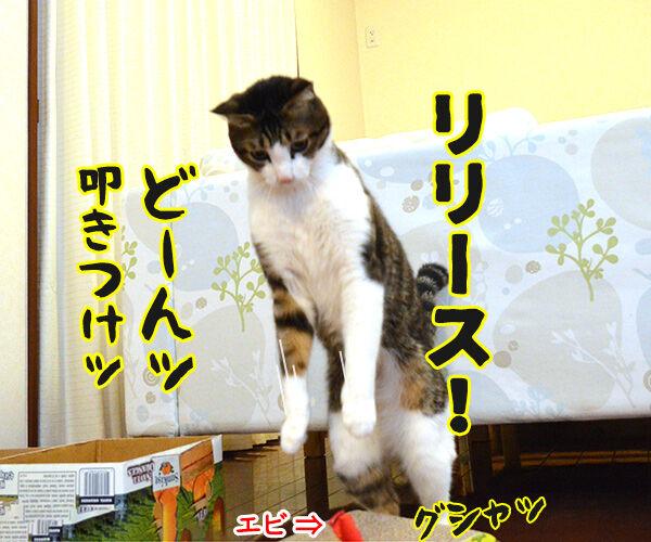 キャッチ アンド… 猫の写真で4コマ漫画 3コマ目ッ