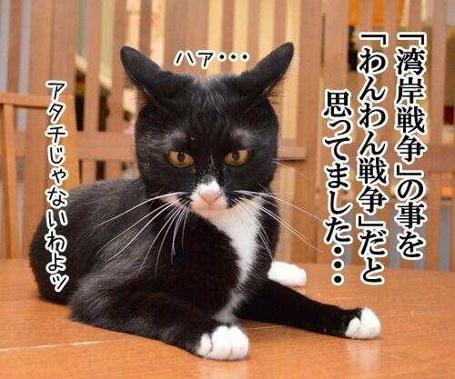 恥ずかしい勘違い 其の二 猫の写真で4コマ漫画 2コマ目ッ