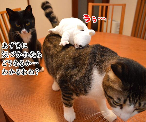 いたずらしちゃおッ 猫の写真で4コマ漫画 2コマ目ッ
