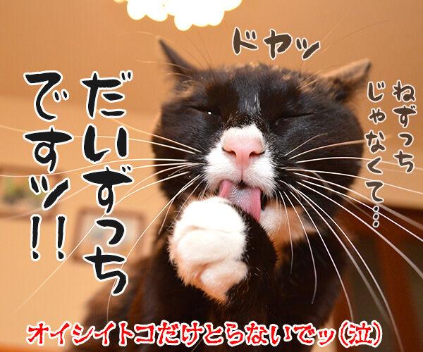 きょうは節分だからッ 猫の写真で4コマ漫画 4コマ目ッ