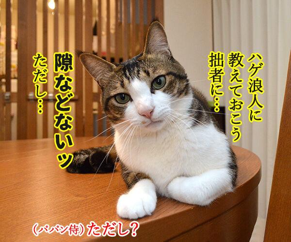 猫侍 其の四 猫の写真で4コマ漫画 3コマ目ッ