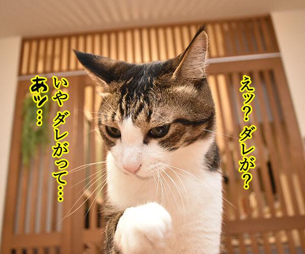 きょうは大暑(たいしょ)なんですってッ 猫の写真で4コマ漫画 3コマ目ッ