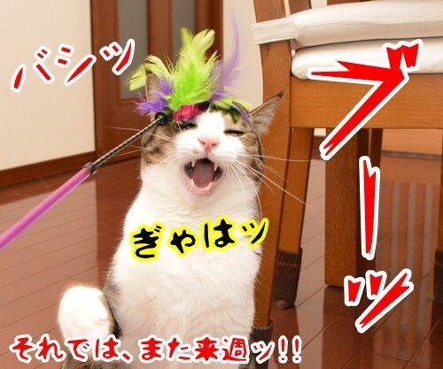 クイズ 四文字熟語ッ!! 猫の写真で4コマ漫画 4コマ目ッ