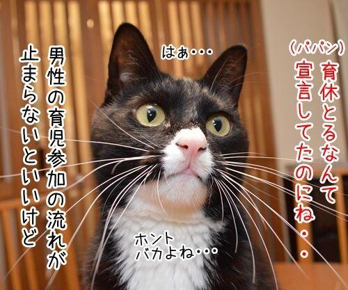 ゲス不倫議員は辞職しちゃったね 猫の写真で4コマ漫画 2コマ目ッ