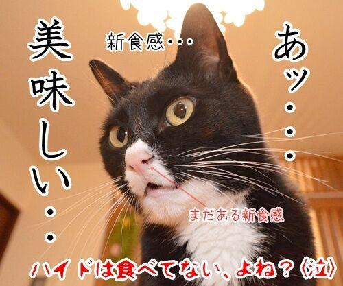 ラルクのハイドも鼻ほじだもの 猫の写真で4コマ漫画 4コマ目ッ