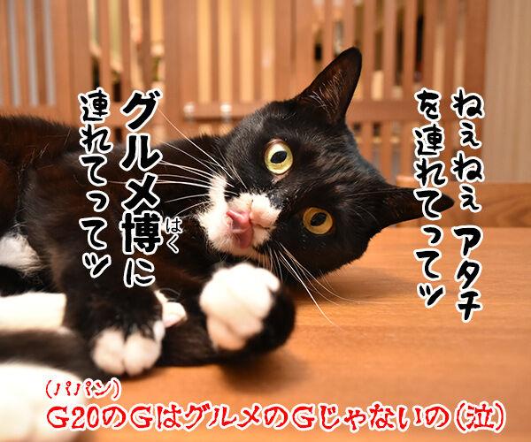 大阪で何やら開催してるらしいのよッ 猫の写真で4コマ漫画 4コマ目ッ