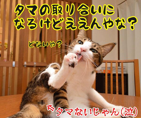 なにしとんねん、ワレ!! 猫の写真で4コマ漫画 4コマ目ッ