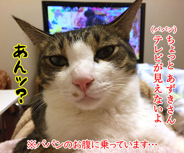 テレビが見えないから 猫の写真で4コマ漫画 1コマ目ッ