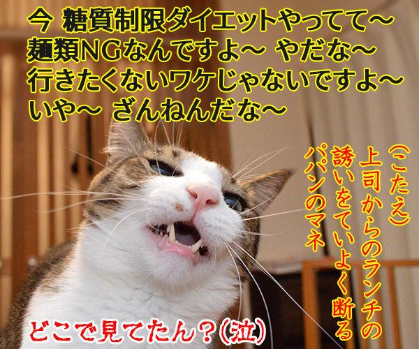 ダレのモノマネでしょうかッ? 猫の写真で4コマ漫画 4コマ目ッ