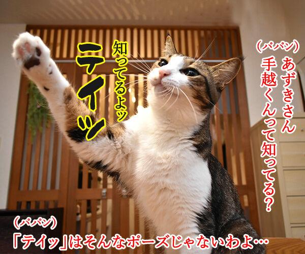 手越くんがジャニーズ事務所をやめちゃったのよッ 猫の写真で4コマ漫画 1コマ目ッ
