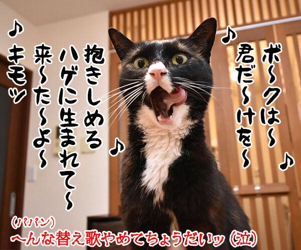 パパンはひきこもりニートってウワサなのッ 猫の写真で4コマ漫画 4コマ目ッ
