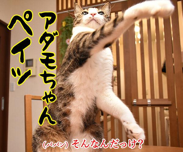LINE Payも20%還元キャンペーンなんですってッ 猫の写真で4コマ漫画 2コマ目ッ