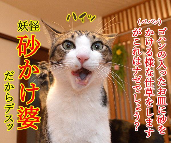 だいずさんにもご試食いただきましたッ 猫の写真で4コマ漫画 3コマ目ッ