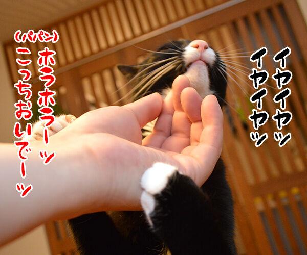 パパンのオヤツを食べちゃったからオ・シ・オ・キ❤︎ 猫の写真で4コマ漫画 1コマ目ッ
