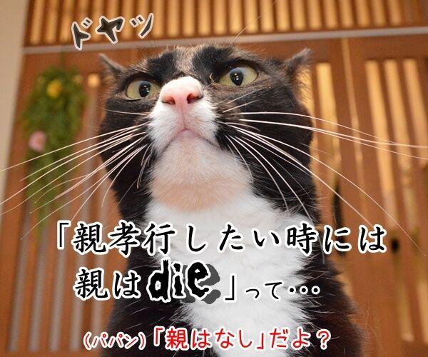 親孝行したい時には…… 猫の写真で4コマ漫画 2コマ目ッ