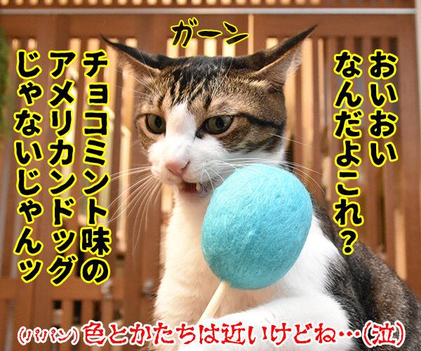 ネコトントンしてみちゃうー? 猫の写真で4コマ漫画 4コマ目ッ