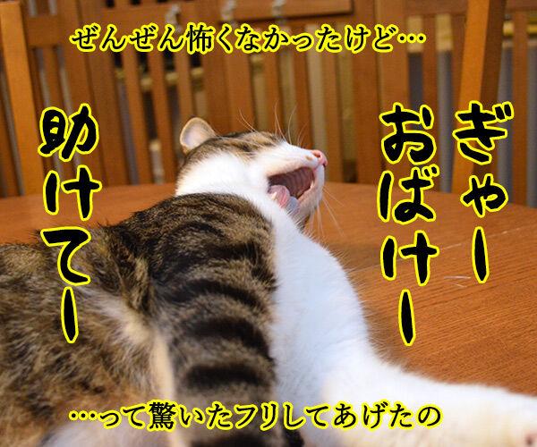 だってボク 猫の写真で4コマ漫画 3コマ目ッ