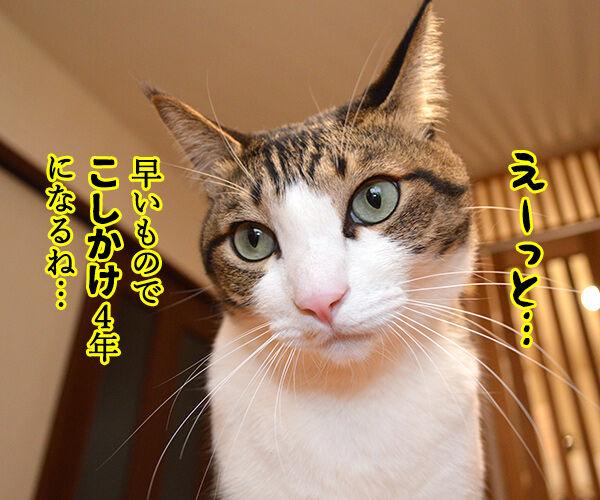 一緒に暮らしてもう何年? 猫の写真で4コマ漫画 2コマ目ッ
