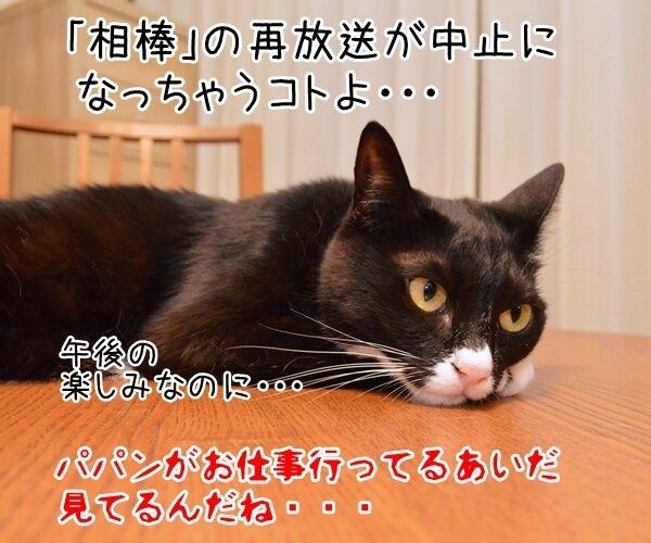 元女優・高樹沙耶が大麻所持の疑いで逮捕ですってッ 猫の写真で4コマ漫画 4コマ目ッ