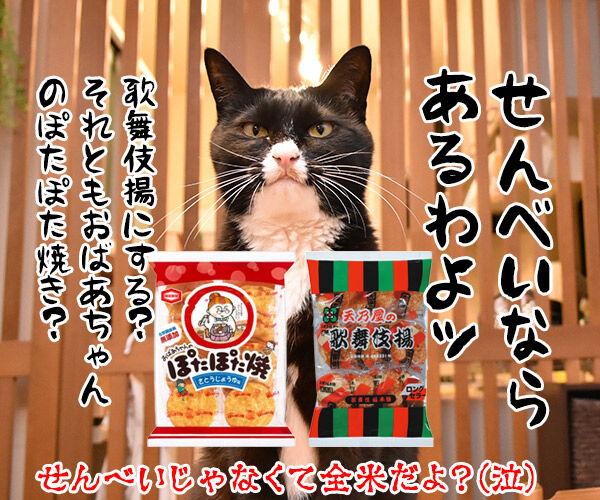 劇場版『名探偵コナン』は全米が泣くね… 猫の写真で4コマ漫画 4コマ目ッ