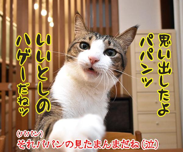 あの曲名が思い出せないのよッ 猫の写真で4コマ漫画 4コマ目ッ