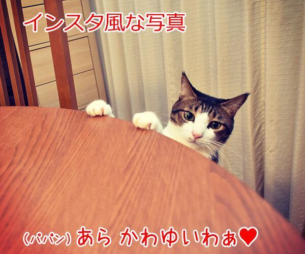 SNSの投稿 〇〇風な写真 猫の写真で4コマ漫画 1コマ目ッ