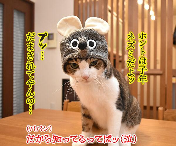 今年の干支を発表しますッ 猫の写真で4コマ漫画 4コマ目ッ