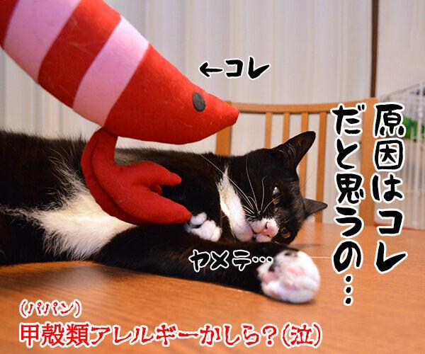 かゆいのよッ 猫の写真で4コマ漫画 4コマ目ッ