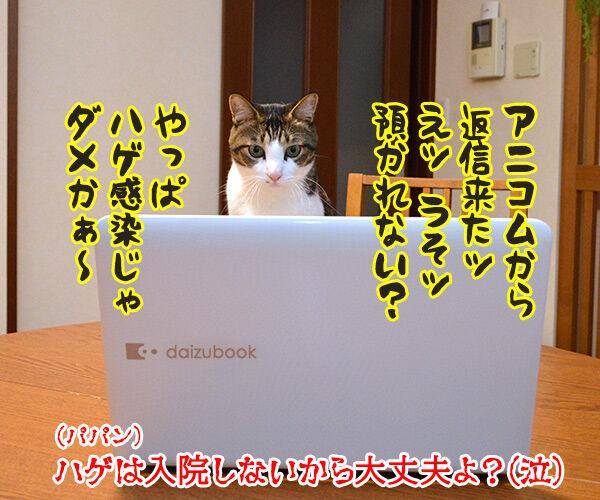 コロナ感染者のペットを無償で預かってくれるんですってッ 猫の写真で4コマ漫画 4コマ目ッ