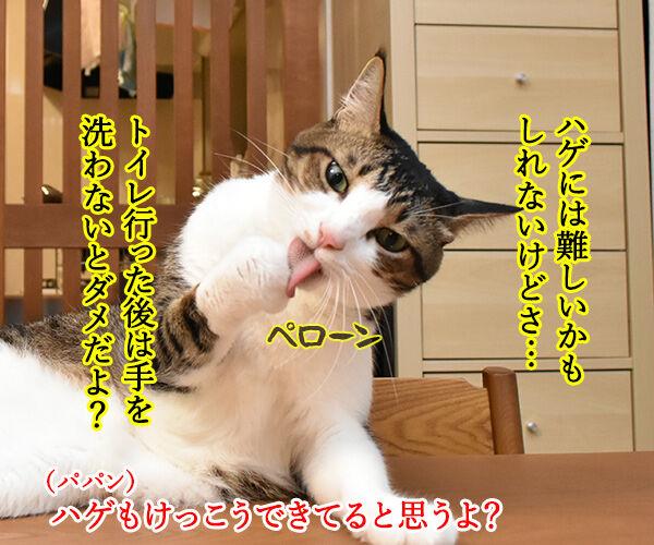 10月15日は『世界手洗いの日』なんですってッ 猫の写真で4コマ漫画 2コマ目ッ
