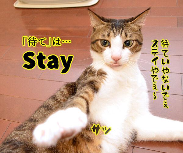 ドッグトレーナー 犬養あずきの英語でしつけるコマンド用語講座 猫の写真で4コマ漫画 2コマ目ッ