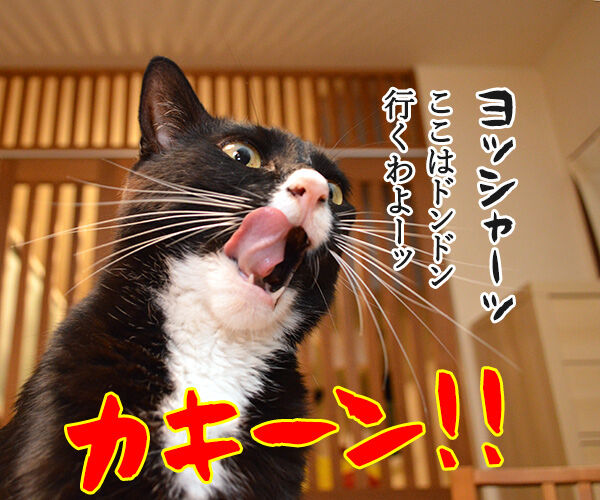 熱闘甲子園で熱くなるのよッッ 猫の写真で4コマ漫画 1コマ目ッ
