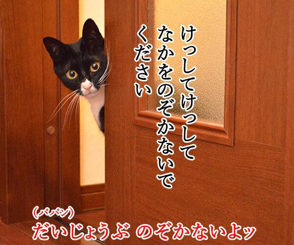 だいずの恩返し 猫の写真で4コマ漫画 3コマ目ッ