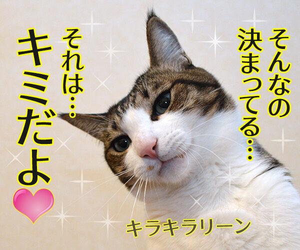 なぞなぞ出すわよッ 猫の写真で4コマ漫画 3コマ目ッ
