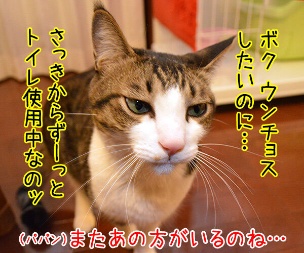 ボクがウンチョスしたいのにッ 猫の写真で4コマ漫画 3コマ目ッ