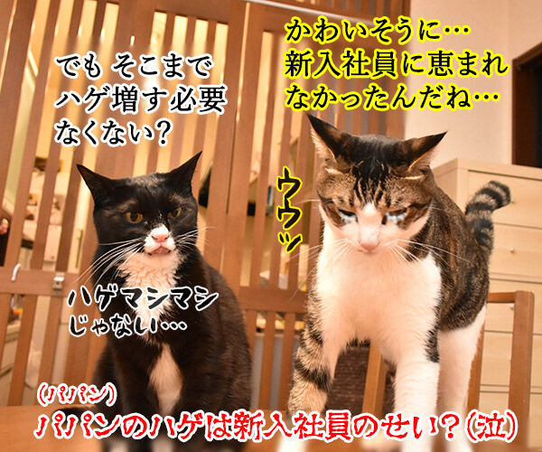 新入社員のみんなへひとことお願いしますッ 猫の写真で4コマ漫画 4コマ目ッ