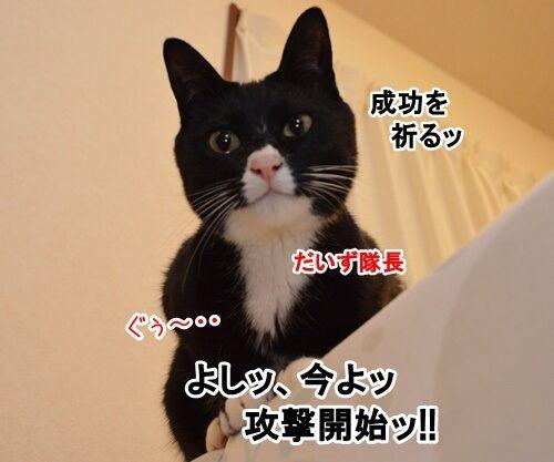 アタック 猫の写真で4コマ漫画 3コマ目ッ