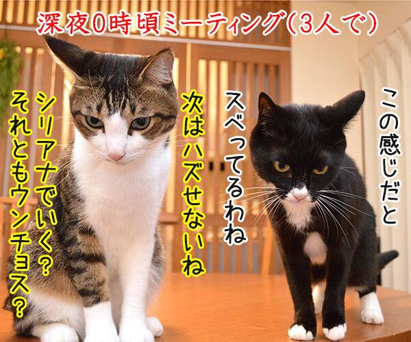 4コマのつくりかた 猫の写真で4コマ漫画 1コマ目ッ