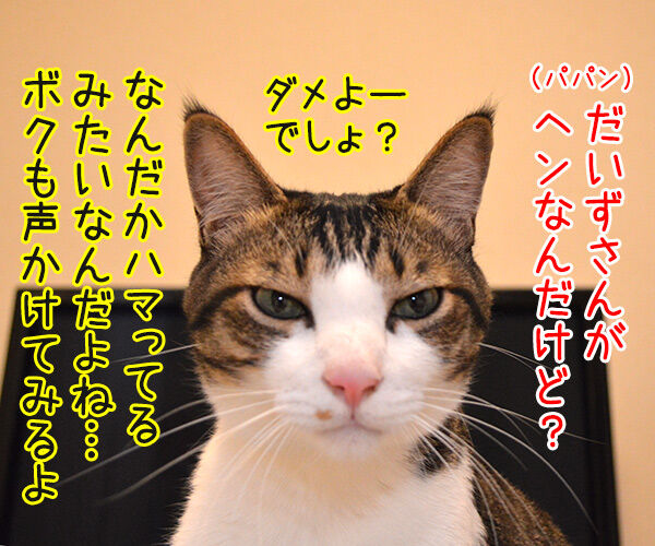ダメよー ダメダメッ 猫の写真で4コマ漫画 3コマ目ッ