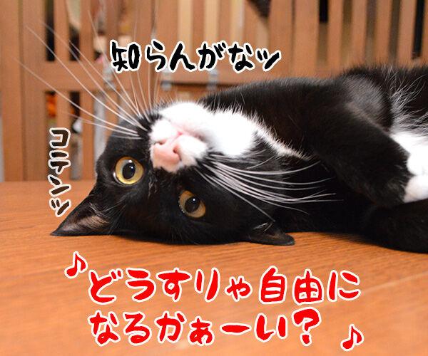 自由っていったいなんだぁーい? 猫の写真で4コマ漫画 2コマ目ッ