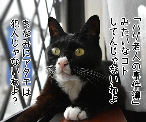 金田一パパンの事件簿 ~スマホゲロリンチョ事件~ 猫の写真で4コマ漫画 3コマ目ッ